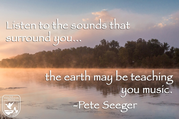 Listen to the sounds that surround you... the earth may be teaching you music
