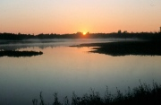 A new day awakens in the marsh.