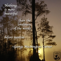 Nothing is more beautiful than the loveliness of the woods before sunrise. - George Washington Carver