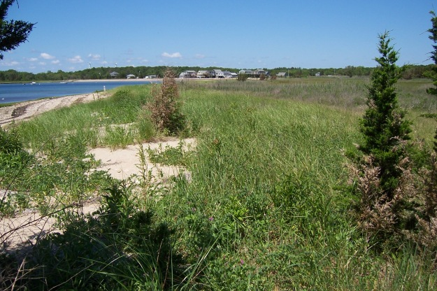 Bouchard oil spill settlement funds of nearly $1 million would provide the critical remaining money necessary for the Buzzards Bay Coalition and multiple land conservation partners to protect nearly 450 acres of coastal habitat in Fairhaven and Mattapoisett, Mass. Credit:  Buzzards Bay Coalition