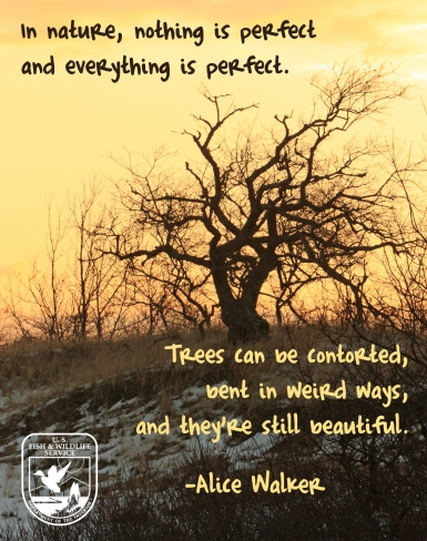In nature, nothing is perfect and everything is perfect. Trees can be contorted, bent in weird ways, and they are still beautiful. -Alice Walker
