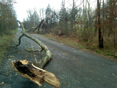 Hurricane Sandy Damages at Great Swamp NWR