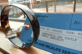 A hawksbill sea turtle shell bracelet. In visitor centers, these items help educate visitors about wildlife trafficking.