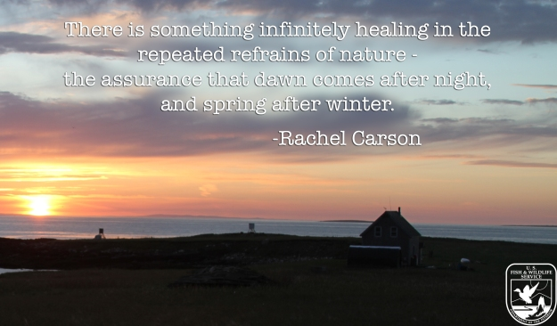 There is something infinitely healing in the  repeated refrains of nature -  the assurance that dawn comes after night,  and spring after winter. - Rachel Carson
