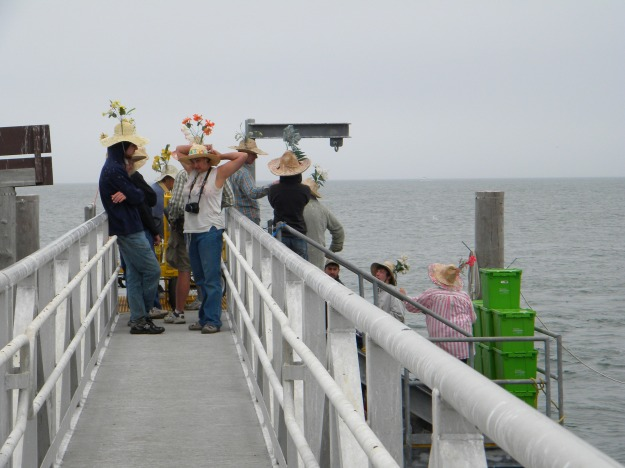 The former dock on the island. Volunteers wear straw hats to protect their heads from strikes by adult common terns that will aggressively defend their colony and nests. Credit: Sarah Nystrom/USFWS