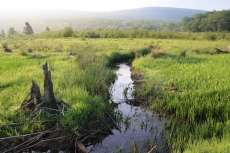 "The ""Little Black"" winds through a headwater wetland in one of the Canaan Valley National Wildlife Refuge's most inaccessible spots. Credit: Ken Sturm/USFWS"
