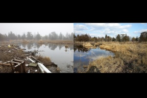 Before and after: A coastal marsh area at the Edwin B. Forsythe National Wildlife Refuge just after Hurricane Sandy, and then about 18 months later after cleanup effort. Credit: Ryan Hagerty (before); Virginia Rettig (after)/USFWS.