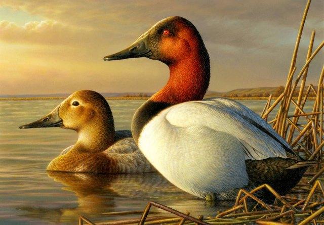 Duckstamp2014