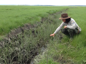 Nancy Pau, wildlife biologist at Parker River Refuge, explains a ditch remediation technique used to restore natural marsh habitat and tidal flow in the Great Marsh. Credit: Margie Brenner/USFWS