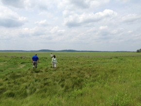 Restoring the Great Marsh