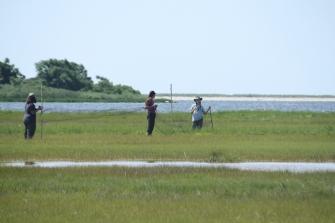 Setting up mist nets at Barn Island Wildlife Management Area. Credit: Charlotte Murtishaw/USFWS