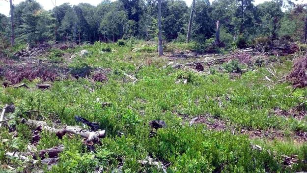 The ground is now covered with green. Photo courtesy of Beth Sullivan, Avalonia Land Conservancy.