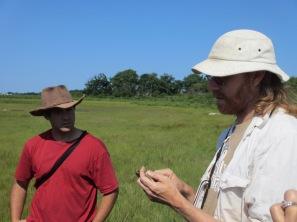 Principal Investigators Chris Elphick and Brian Olsen discuss tidal marsh bird data collection. Credit: Margie Brenner/USFWS