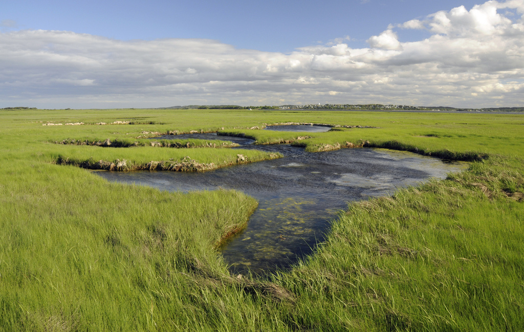 Coastal marshes at Parker River National Wildlife Refuge in Newburyport, Massachusetts. Credit: Kelly Fike/USFWS