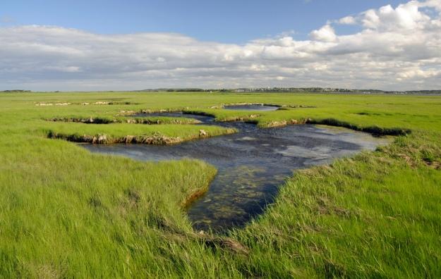 Coastal marshes at Parker River National Wildlife Refuge in Newburyport, Massachusetts. Credit: Kelly Fike/USFWS
