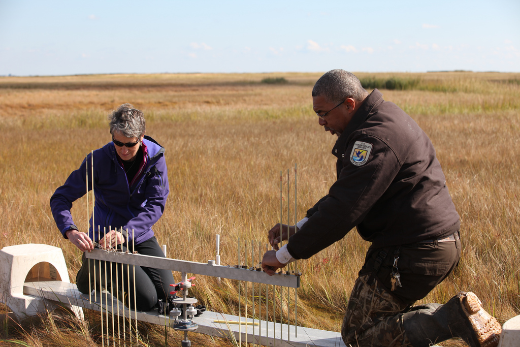 Secretary Jewell joins biologist Vinny Turner in data collection using the surface elevation table. Credit: Keith Shannon/USFWS