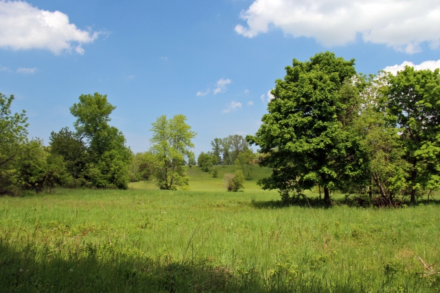 The Stella Niagara property will secure both aquatic and upland wildlife habitat. Photo Credit: Western New York Land Trust