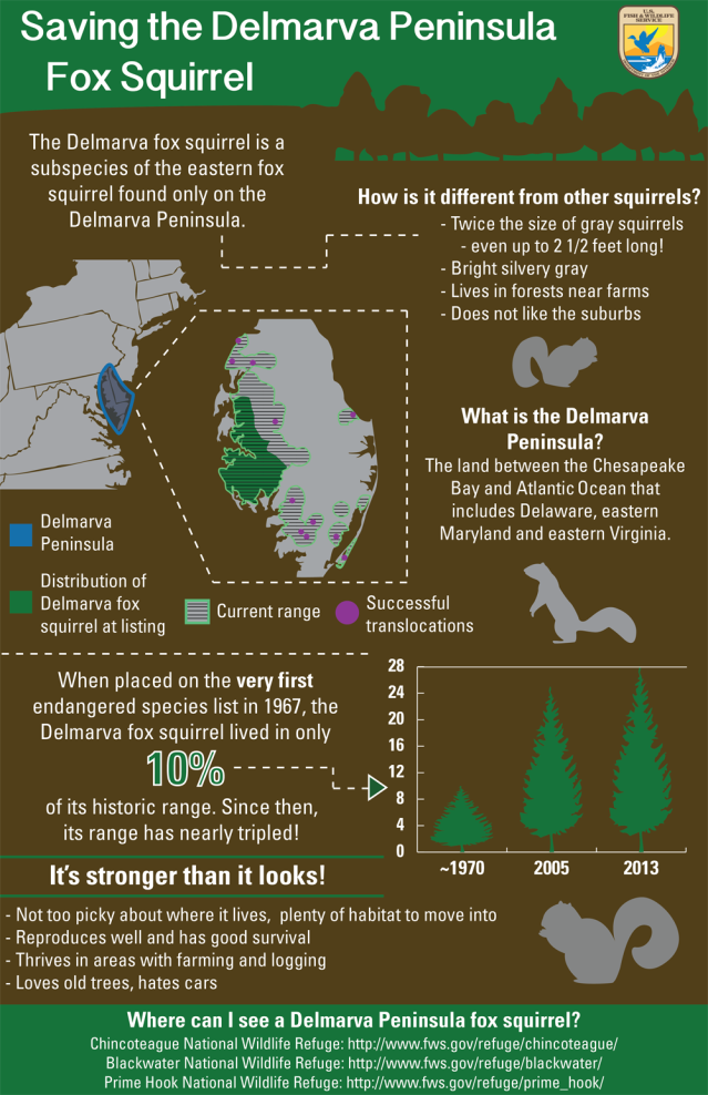 Did you miss our infographic on the squirrel's recovery? By Alexa Marcigliano/USFWS