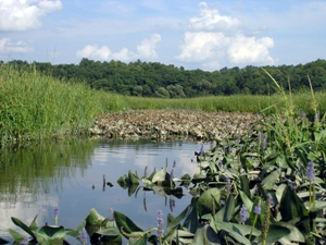 Tivoli Bays are one of the four tidal wetlands protected by the Hudson River Research Reserve.  Photo courtesy of NYSDEC