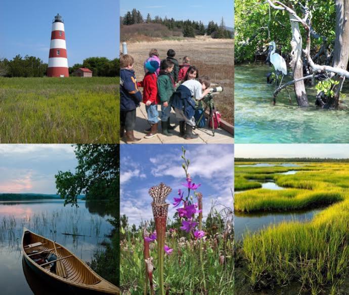 Collage: lighthouse, kids viewing wildlife, heron, canoe in water, flowers, and meandering wetlands.