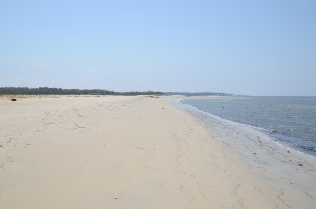 Check out the restored Kimbles Beach! Credit: Eric Schrading/U.S. Fish and Wildlife Service