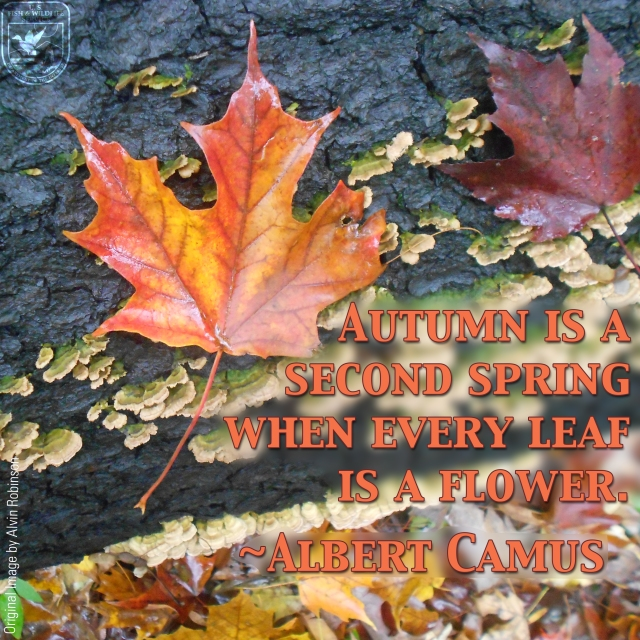 Autumn leaf_Alvin RobinsonWWmeme
