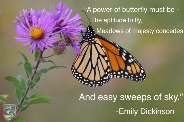 butterly wednesday wisdom yo