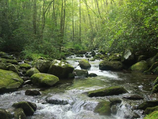 Lynn_Camp_Prong,_Great_Smoky_Mountains_National_Park[1]