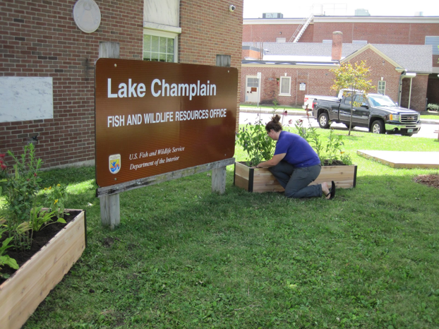 Lake Champlain's summer intern finishing up the pollinator garden! Credit: USFWS