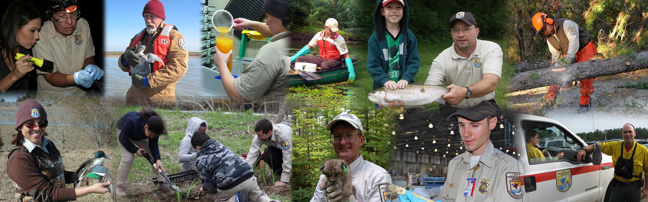 U.S. Fish and Wildlife Service Northeast Region