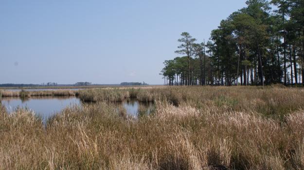 Blackwater National Wildlife Refuge. Credit: Ray Paterra/USFWS