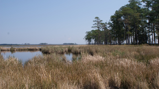 Blackwater National Wildlife Refuge. Credit: Ray Paterra/USFWS