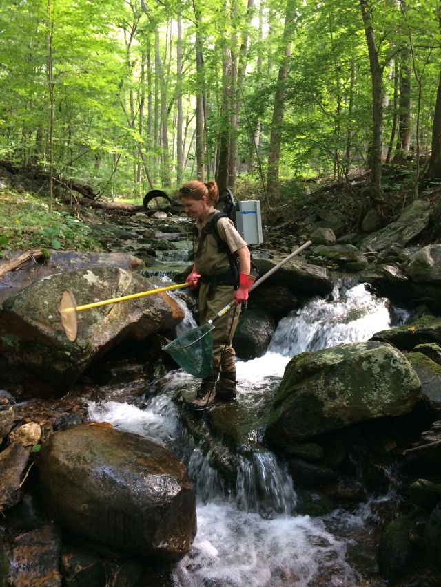 electrofishing in Clifford Branch