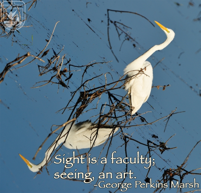 Original image by Doug Racine