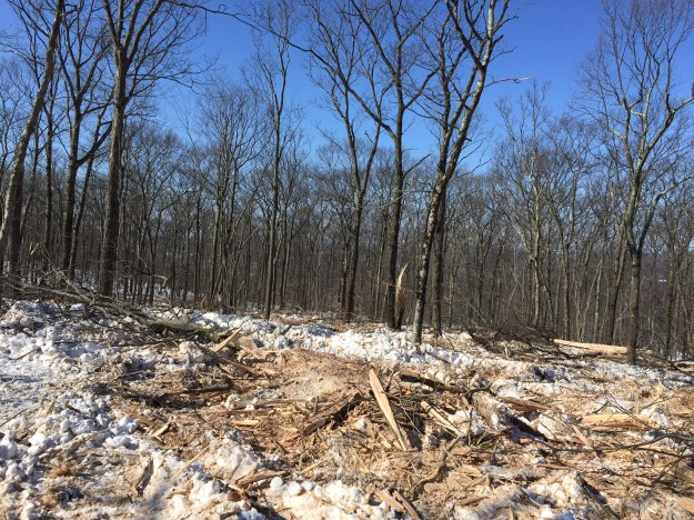 Sure, it doesn't look so great now, but wait a growing season. This place becomes a hotspot for food and shelter for tons of wildlife. Photo courtesy of Benny.