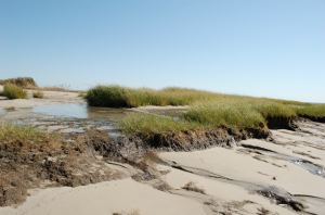 Salt marsh erosion in Delaware Bay as a result of flooding from Hurricane Sandy. Extreme storms and floods are predicted to increase in the Northeast as a result of climate change. (Credit: Katie Conrad/US Fish and Wildlife Service)