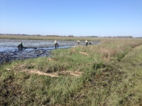 Staff of ER&M plant Spartina alterniflora plugs by hand into the mudflats along Fowler Road at Prime Hook National Wildlife Refuge in Milton, DE, part of Hurricane Sandy-funded marsh restoration work that will build a more resilient coast along Delaware Bay.