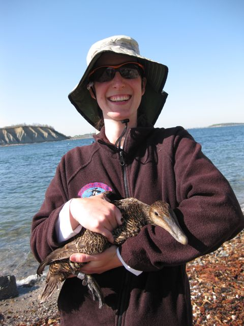 Jennifer Malpass with a female American common eider.