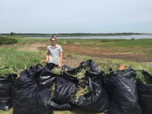 Lauren Healey (pictured above) and other team members from Gulf of Maine Institute and Newburyport High School removed 14 bags full of invasive pepperweed from the Great Marsh last month.