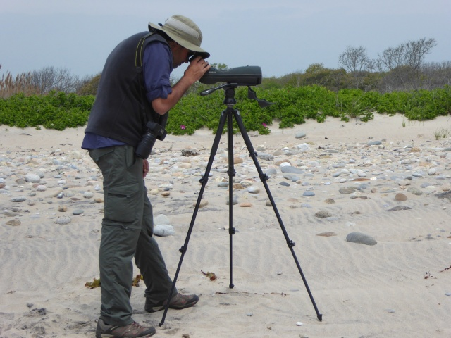 Pablo gazes through the spotting scope at shorebirds on the Rhode Island coast.