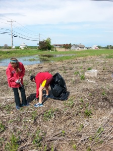 Two students from the River Valley Charter School fill a garbage bag with invasive pepperweed plants, allowing native salt marsh grasses a chance to regenerate in the salt marsh at Parker River National Wildlife Refuge in Newburyport, Massachusetts.