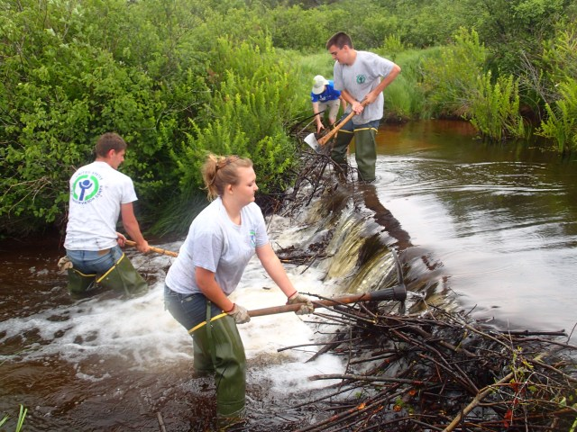 The YCC crew at Canaan Valley NWR hard at work tearing out a destructive beaver dam. The beavers gave them a run for their money, as the crew had to go back three more time! (Photo credit: Holly Black.)