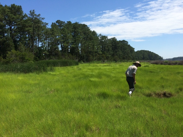 Seeds of Success: Bureau of Land Management Intern in North Carolina Field