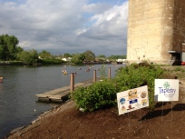 Riparian garden planted with native species along the Buffalo River with help from McKinley High School and Tapestry Charter School students.
