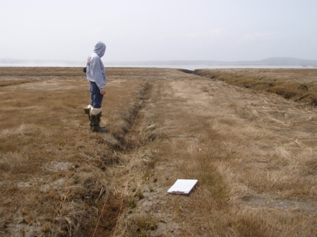 The ditch remediation technique is used on these newly mowed and filled salt marsh ditches in the Great Marsh. Two bailing twines on stakes keep the rolled hay in the ditch. Credit: Burdick, Peter, Moore, Adamowicz and Wilson