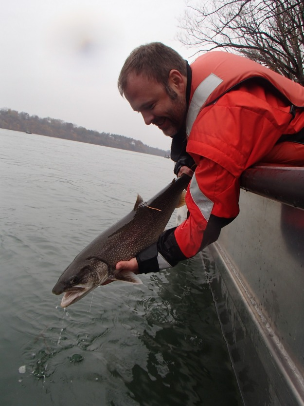 Ten lake trout were tagged and released back into the Niagara River in November 2015. We will tag 10 more fish next year, as well. Photo credit: USFWS