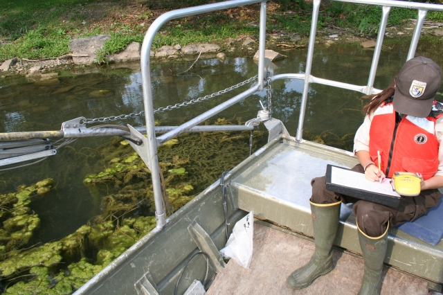 Fish biologist Kelly McDonald, delineates the extent of the hydrilla infestation. Photo credit: USFWS