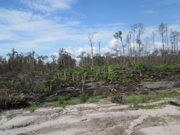 DeforestationIndonesia