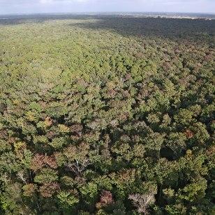 Great Dismal Swamp, Credit: USFWS