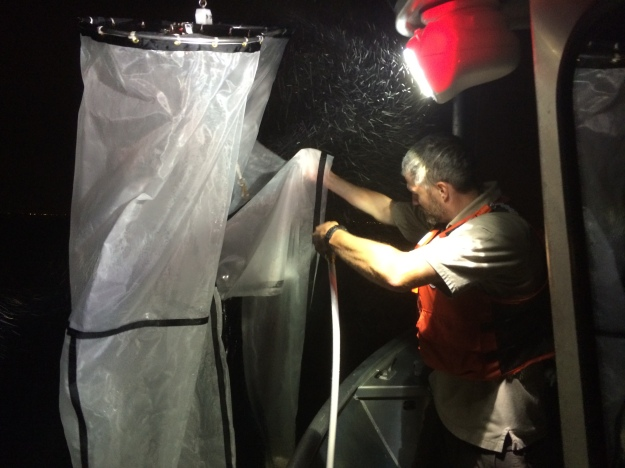 After spending time on the water, staff rinse down ichthyoplankton nets. They skim the top of the water to catch larval fish at night, when they rise to the top. Photo credit: USFWS